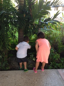 Lizard-hunting