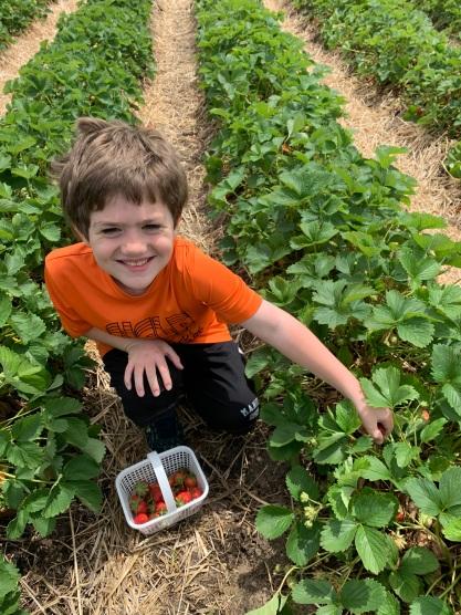 G strawberry-picking